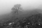 Minno_Fog_Trash_B&W_Photoshop_Print